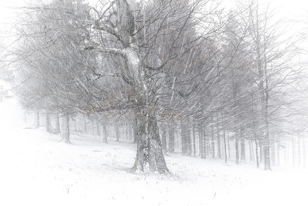 Ciucas-mountains-tree-in-the-blizzard