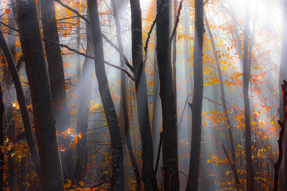 apuseni-forest-rays-of-hope-autumn